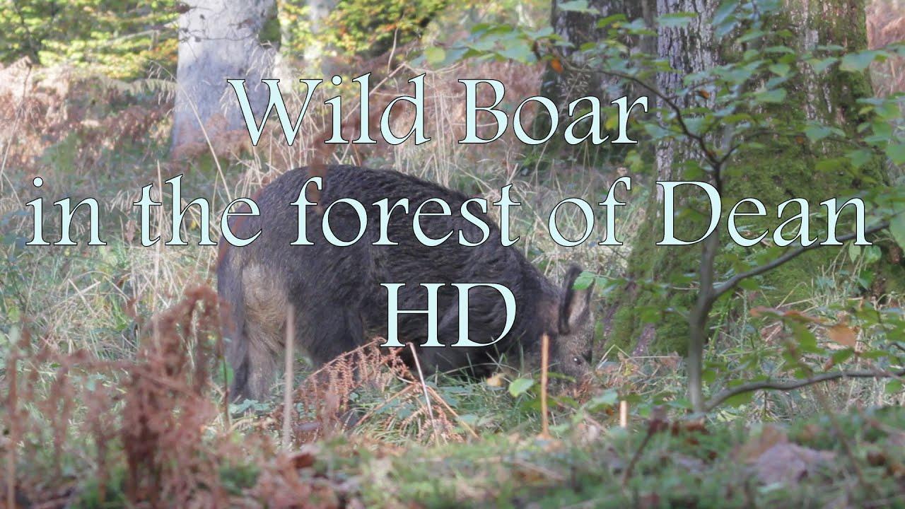 Pinewood 5990 wild boar extremadamente chaqueta caza chaqueta señores chaqueta