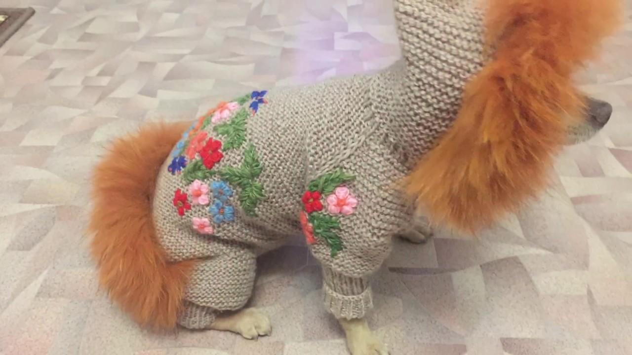 Вяжем комбинезон и свитер для той-терьера