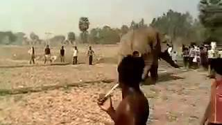 Elephant attack in Bankura