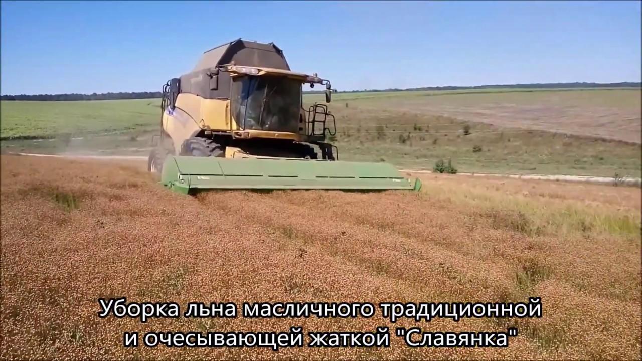 Ютуб выращивание и уборка масличного льна 97