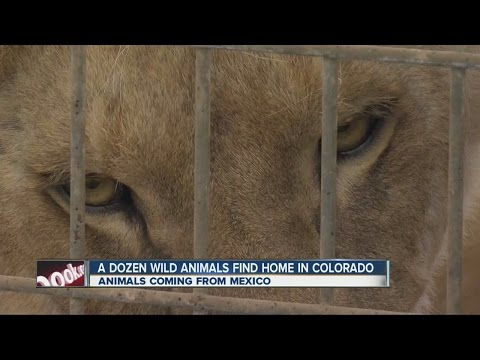 Exotic animals from Mexico find home in Colorado