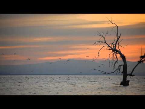 Simo Saidi - Birds Philosophy