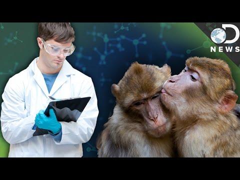 Why These Scientists Masturbate Animals