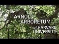The Arnold Arboretum of Harvard University! (Science IRL S3 Ep7)