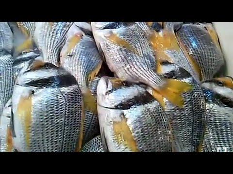 Market in Dammam city, Saudi Arabia - Fish Area
