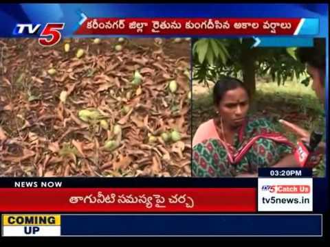 Rain Badly Damaged Crops in Karimnagar : TV5 News