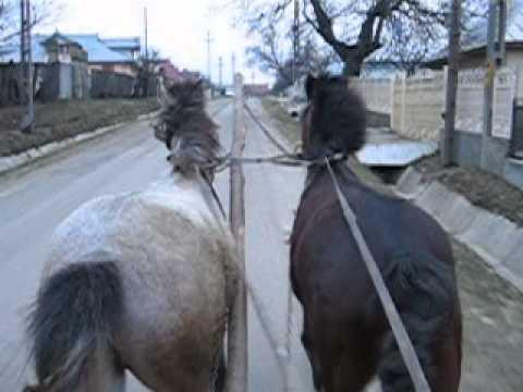 2015 proba paunesti viisoara de cai semigrei