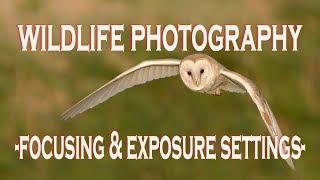 WILDLIFE PHOTOGRAPHY CAMERA SETTINGS:  Focusing and Exposure