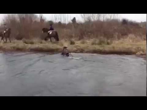 Horse falls into canal in epic fail