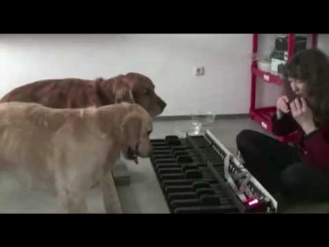 Perros - Dos perros tocando el piano