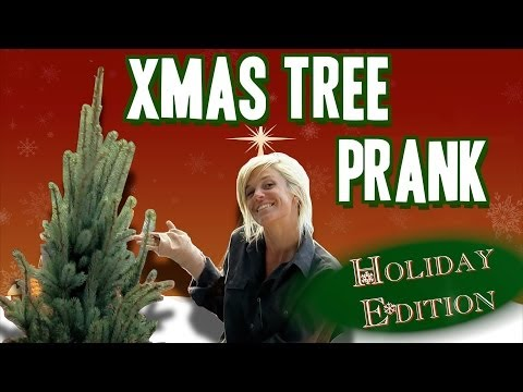 Super-Quick Growing Christmas Tree - Gagstravaganza Day 12