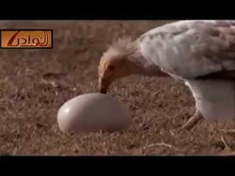 ذكاء طيور سبحان الله