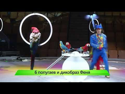 ИКГ Дикобраз и попугаи #7