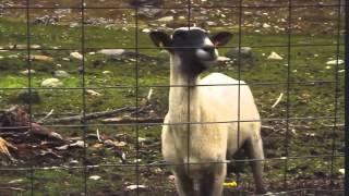 download lagu Còpia De: Dvbbs-raveheart Goat Remix gratis