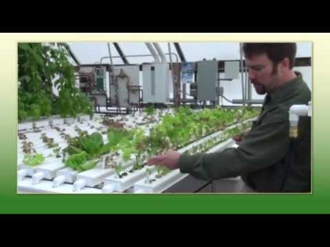 Sam's Greenhouse Tips   Operating Nft Hydroponic Table