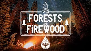 Forests & Firewood 🔥 - An Indie/Folk/Pop Campfire Playlist 🏕️