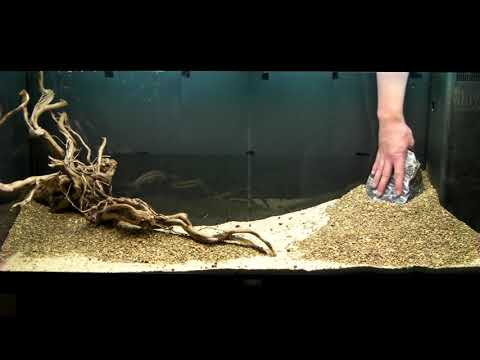 Aquarium Setup - Aquascape - Step By Step And Final Product - Live Planted Fish Tank video