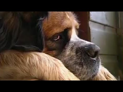 0 How to stop your dog jumping   Barking Mad   BBC Pets