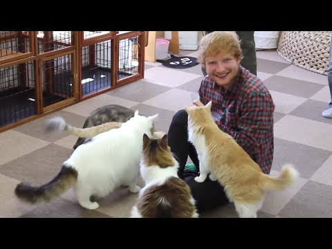 Ed Sheeran - X Tour Diary (Part 2)