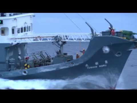 Bob Barker attacked by Japanese harpoon ships