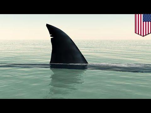 Акула прокусила ногу купальщице во Флориде