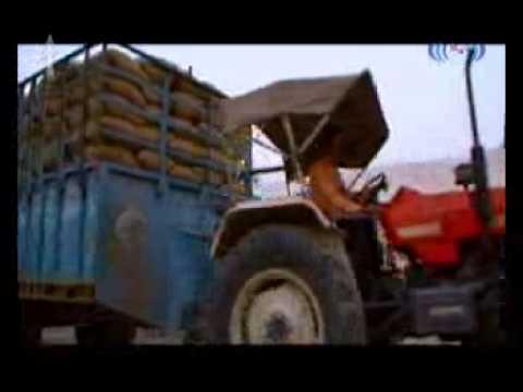 Basmati Rice, Sella Basmati Rice, Basmati Rice Supplier, Sharbati Basmati Rice
