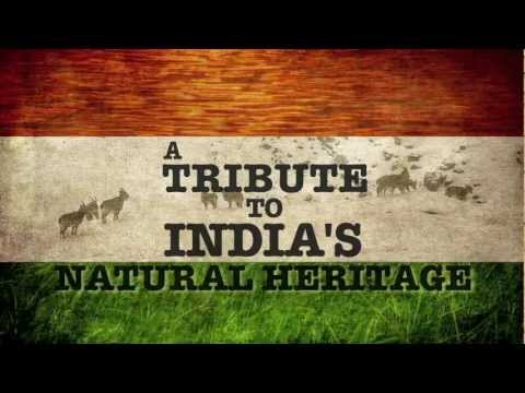 In celebration of Republic day, we at Felis Films would like to bring to you a unique assemblage of footage from across Wild India. This video is a tribute t...