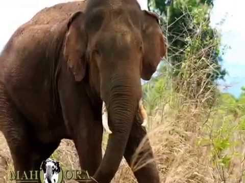 Mahoora Tented Safari Camp in all National Parks and Nature Reserves Sri Lanka