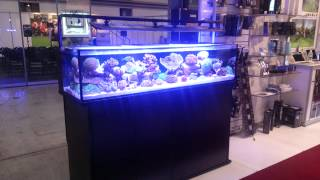 New inivatative marine Shallow reef tank