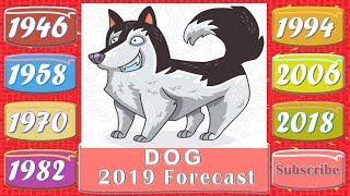 Dog Horoscope 2019 | Born 1946, 1958, 1970, 1982, 1994, 2006, 2018