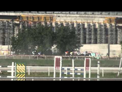 89. Srpski Derby - Hipodrom Beograd - 03.07.2011.