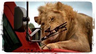 ПРИКОЛЫ С ЖИВОТНЫМИ подборка | FUN WITH ANIMALS compilation #480