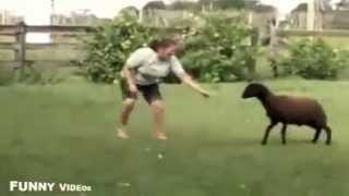 FUNNY VIDEOS: Funny Animal Videos - Top funny animal moments