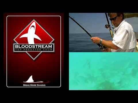 Shark Fishing Shark Chum Bloodtream Top Predator Chum