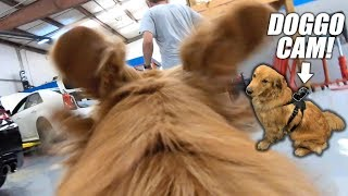 The Boys Bought me a Doggo GoPro Mount! (Ripping in the Shop)