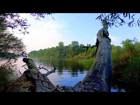Calming Slow River in the Forest. Relaxing Water Sounds. (10 hours) White Noise for sleep.