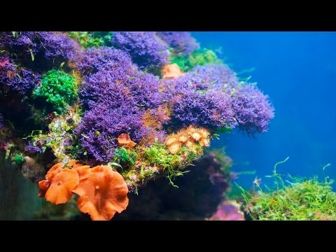 Do Corals Need to Eat? | Aquarium Maintenance