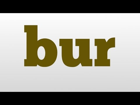 bur meaning and pronunciation