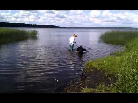 Bella badar i Finjasjön