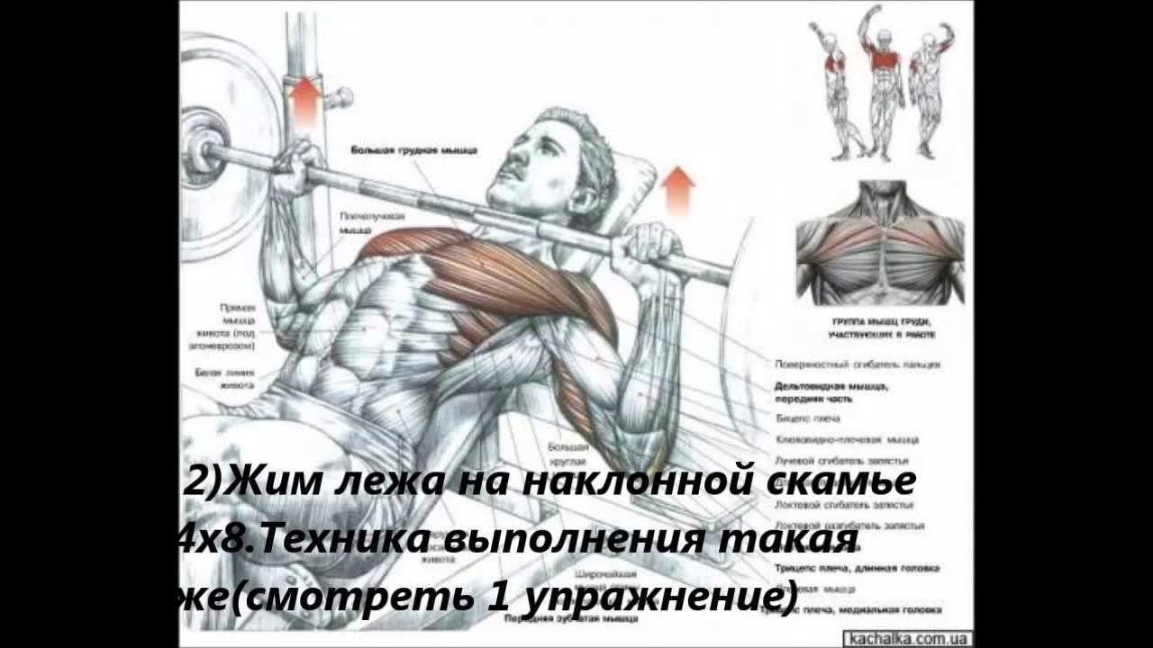Бодибилдинг, как накачать мышцы, как накачать грудь, как накачать спину, гр
