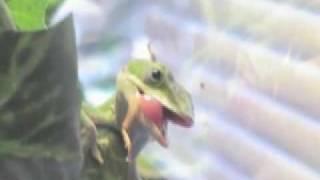 Watch Breeders Bang On video