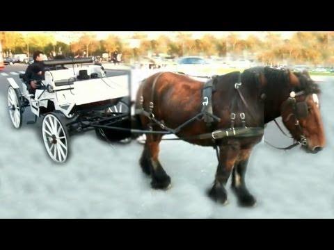 Magical draft horse & carriage at Eiffel tower * エッフェル塔 パリの 魔法の馬 IMG *