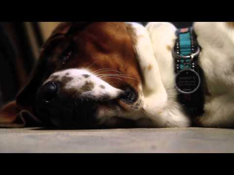 Sammy The Basset | ALL IS LOVE