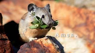 A United Methodist Prayer for Animals