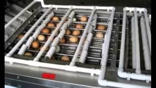 High Quality Chicken Egg Peeling Machine,China Shelling and Peeling Machine Supplier