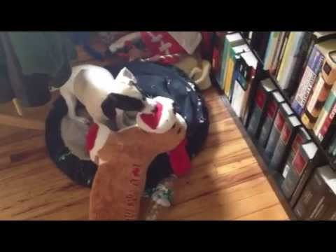 0 Puppy making out with stuffed animal