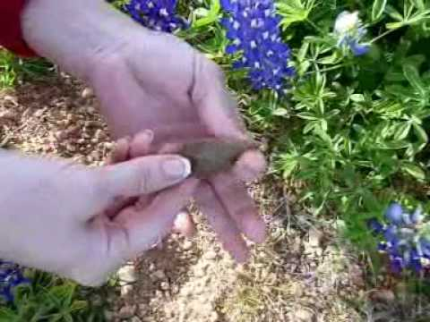 Our anniversary arrowhead hunt at the ranch..Join Sterling and Lana in the bluebonnets.