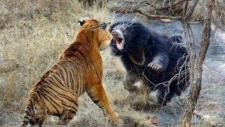 ලොකුම වලි ටික බලන්න Biggest wild animal fights !!