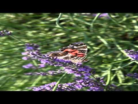 Serenity Lavender Farm Harrow Greater London