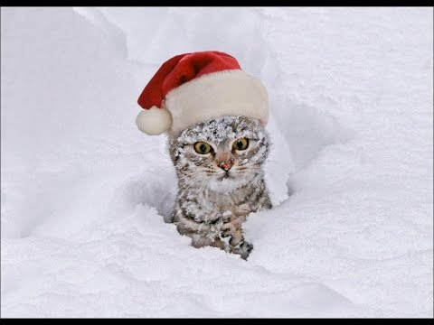 Животные в снегу! зимняя подборка 2014!